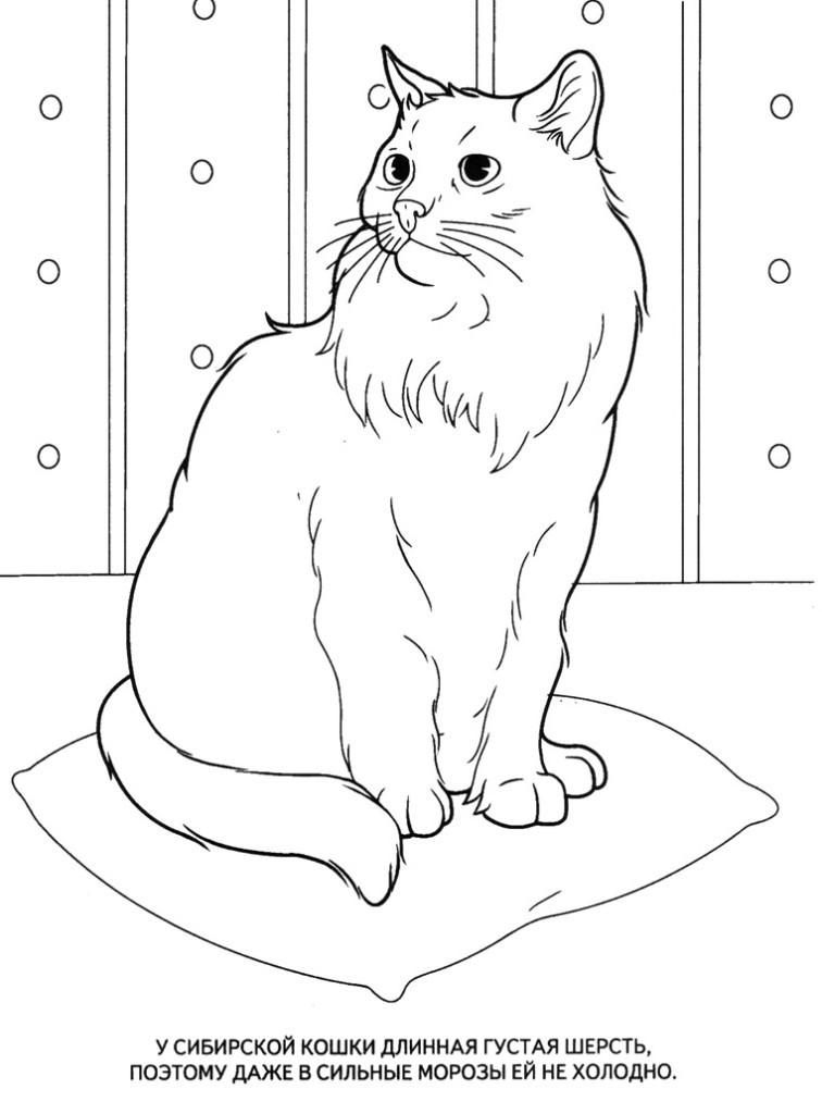 Рисунки кошек уже раскрашенные