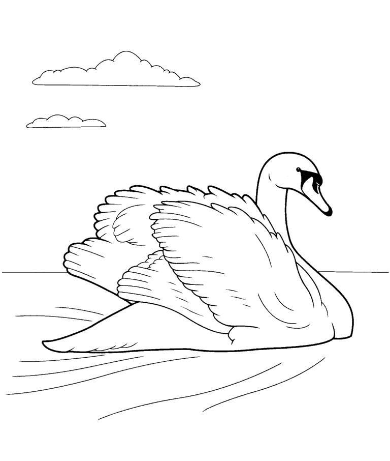 раскраска лебедь картинка