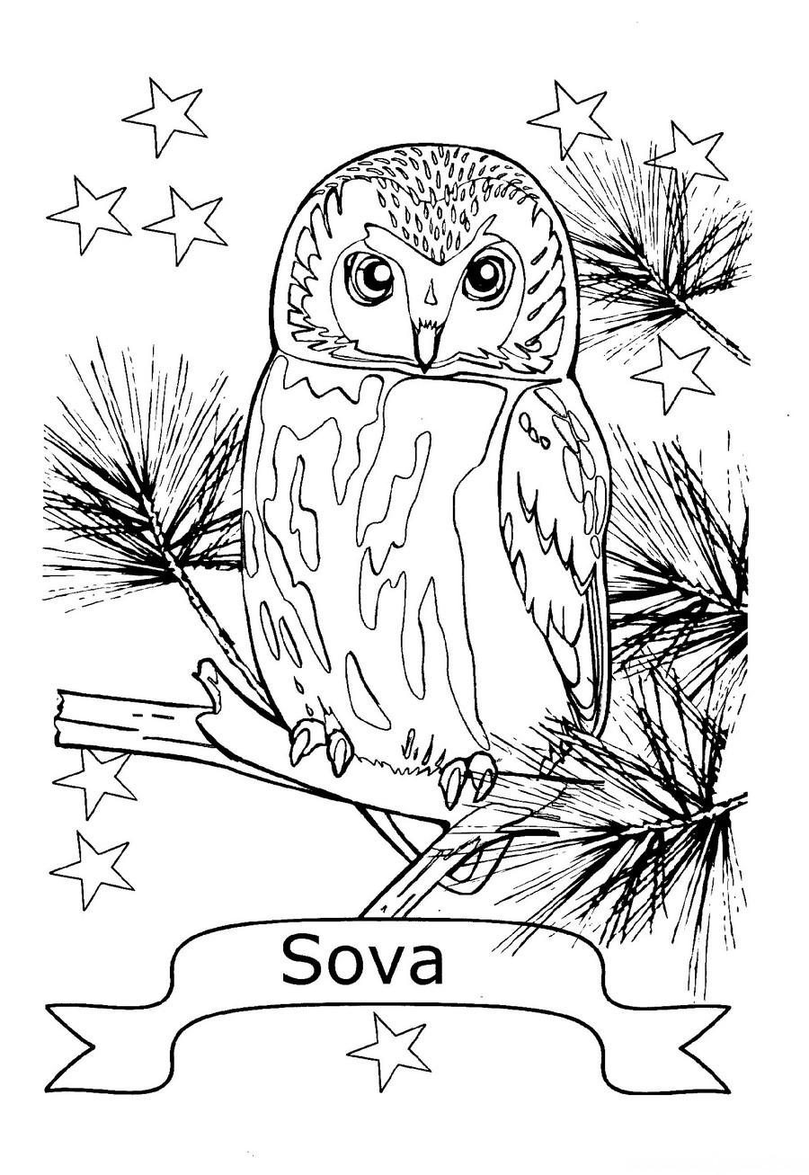Раскраска сова для детей — Край друзей
